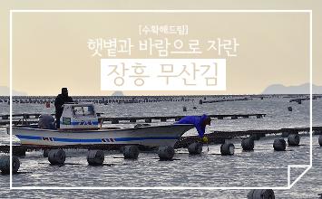 [수확해드림] 자연드림 수미김의 원초, 장흥무산김