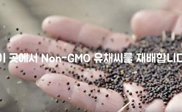 Non-GMO 유채씨 어디서 올까요?