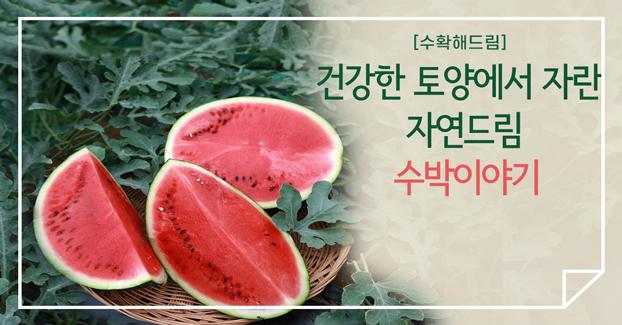 [수확해드림] 자연드림 유기농·무농약 수박 이야기